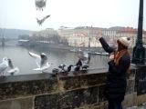 Кормление Алёнкой почти ручных голубей и наглых чаек на Карловом мосту.
